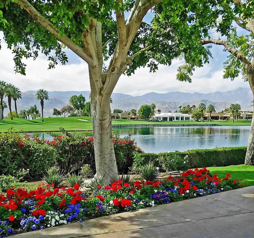 palm desert landscaping company