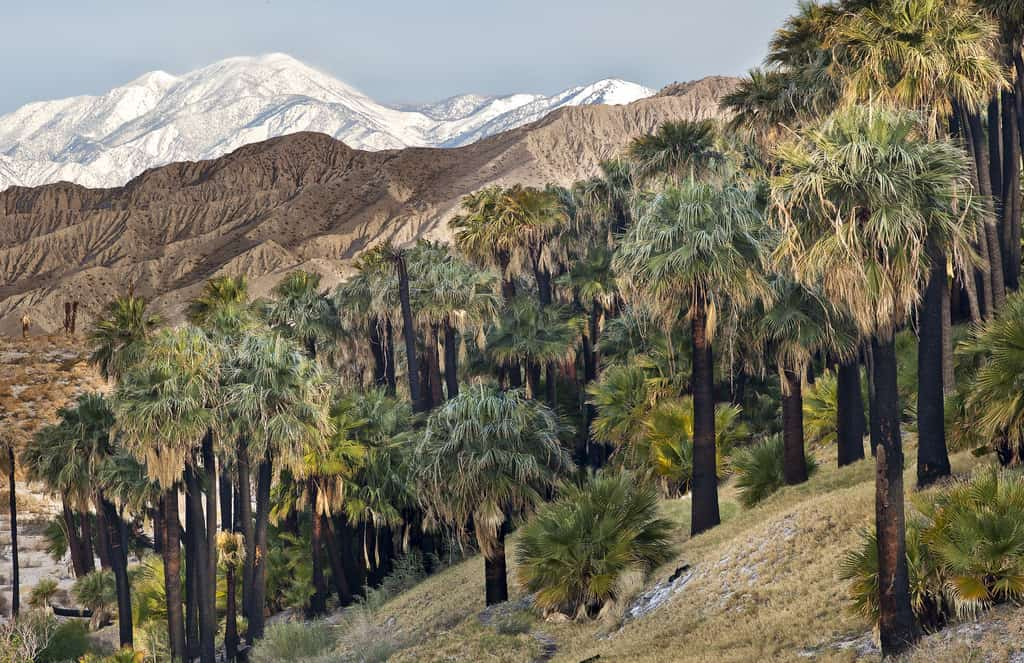 thousand palms landscaping